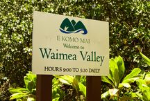 Waimea Valley /  Oahu / オアフ島のワイメアバレーについてご紹介いたします!