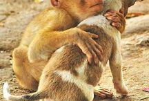 Le grand coeur des animaux