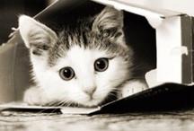 Kitty! / by Amanda Schmidt-McBride