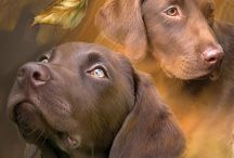 Dog & Cat Art / Pets bring out the best in us. A collection of dog and cat art by Carol Cavalaris.