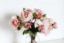 Flores / by Alejandra Apablaza