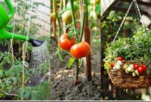 Gardening, Outdoor Living, and Landscaping