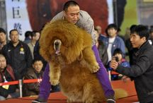 Dogs & Culture / Dogs have a long history in the our culture past and current. #dogs #culture