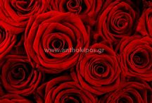 Η φροντίδα του τριαντάφυλλου / http://www.anthokipos.gr/blog/h_frontida_tou_triantafullou.html