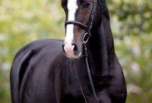 Pony/horses
