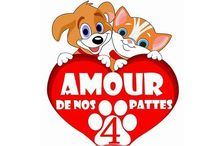 Associations animaux