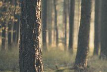 spec: Wood Elves
