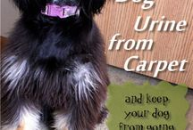 Dogs / All about Dogs and how to clean after them