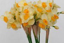 Пионы, тюльпаны, гортензия, ирис.  Peonies, tulips, hydrangea, iris. / Искусственные пионы, гортензии, тюльпаны, ирисы цветы.