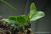 Pests & Diseases / Photographs and information about pests and diseases that affect plants.