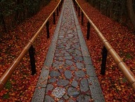 Autumn's Blazing Colors / by Dora Hernandez