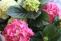 Plants, Plants, Plants / Made in Flowers stocks a wide range of indoor and outdoor plants.