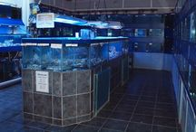 Views around the Marine Section at Wharf Aquatics / Pictures of our marine room, corals and fish.