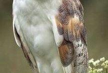 peinel de aves