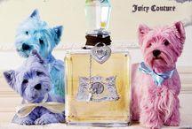 Parfüm de la pet