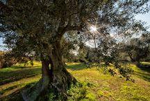 """Natura / Nature / Natura unica abbraccia """"Tenuta Monacelli & Masseria Giampaolo"""""""