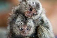 monkey's