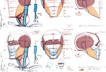 anatomy&tutorials