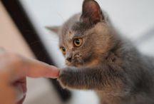 CUUUUTE... / pucciosità e coccolosità, principalmente in forma felina...