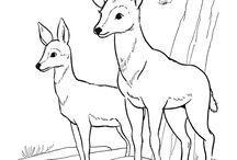 Coloring Pages / Of Animals / Színezhető lapok