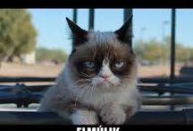 grumpy cat :D