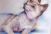 Peintre (Chris Dunn) / Chats
