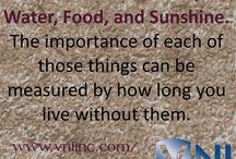 VNI (Victory Nutrition International)