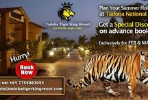 Speaicl Descount offer / Don't miss out the opportunity to visit India's no.1 Tiger Reserve