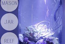 fish tank diys
