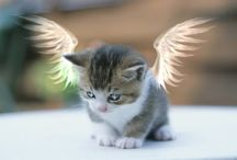 Cats / Angel