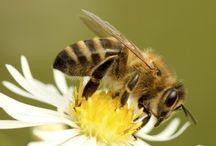 Bee Hope