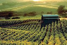 Sonoma County: Land That I Love