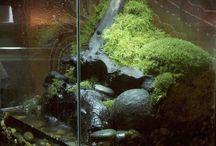 Pflanzen und Terrarium