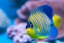 Fishies / by Linda Cox