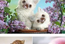 Zvieratá a zvieratká