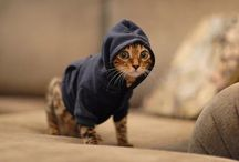 Cute animals clothes