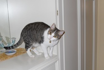 """Pets / A collection of best pictures of """"Sophie"""" (my cat)"""
