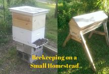 Bee keeping / by Holly Michael