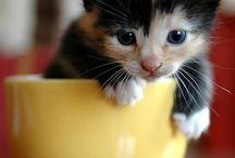 Chat cute