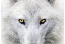 Zwierzę Mocy - Wilk