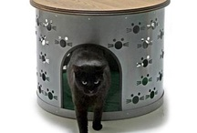 Cats - Macke i mackaste stvari / by Majda Molicnik
