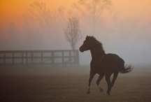 Horses....Loved 'em all my life!