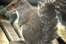 Posti a Londra London squirrel #London #thisislondon