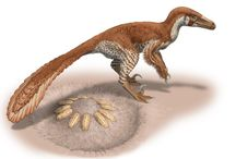Csotonyi's Dinos