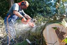 tree surgeon manchester / Do you have amusement garden and need to prune the trees? Click here http://northcheshireforestry.com/