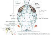 Fisiología del deporte