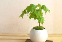 Bonsai 盆栽・苔玉