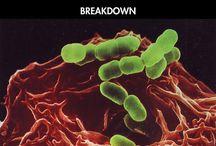 immunotox