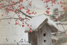 obrazky zima