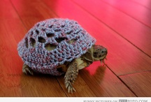 Cool craft ideas for turtles
